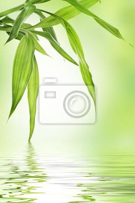 Bamboo frontière avec copie espace