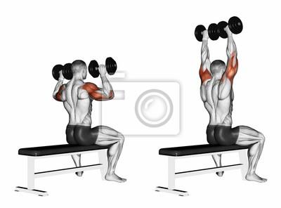 Posters Banc d haltères assis. Exercice pour la musculation. Les muscles  cibles sont a4a4591d6b5