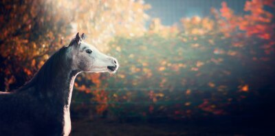 Posters Beau, arabe, cheval, blanc, tête, merveilleux, nature, fond