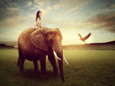 Posters Beau, femme, séance, éléphant