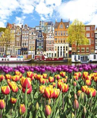 Posters Beau paysage avec des tulipes et des maisons à Amsterdam, en Hollande