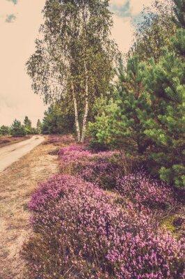 Posters Beau, paysage, forêt, fleurir, bruyère, rural, route