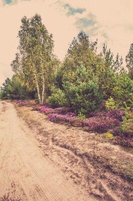 Posters Beau, rural, paysage, fleurir, bruyère