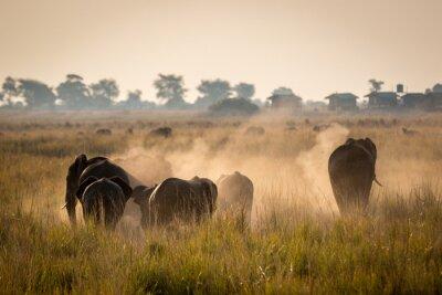 Posters Belle faune au parc national de Chobe, au Botswana