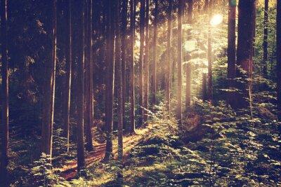 Posters Belle forêt de rêve