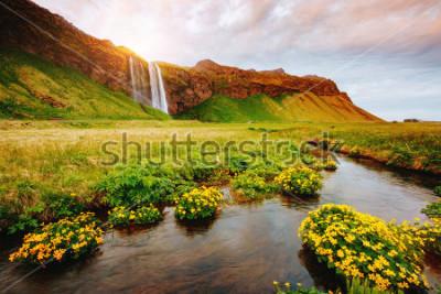 Posters Belle vue du champ vert fleurs au soleil. Scène dramatique et magnifique. Attraction touristique populaire. Lieu lieu célèbre cascade de Seljalandsfoss, Icelande, Europe. Découvrez le monde de la be