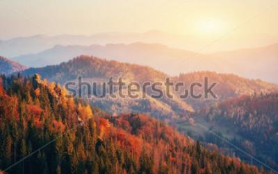 Posters Belle vue sur la forêt par une journée ensoleillée. Paysage d'automne. Carpates. Ukraine, Europe