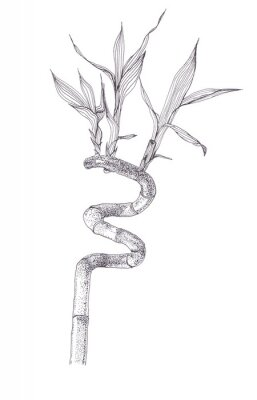 Posters Black ink dots drawing sketch of bamboo branch isolated on white background. Hand drawn illustration of beautiful bamboo brunch spiral with leaves.