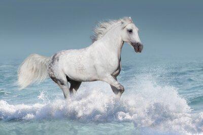 Posters Blanc, arabe, cheval, course, galop, vagues, océan