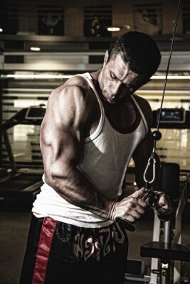 Posters Bodybuilder trains the muscles in the gym