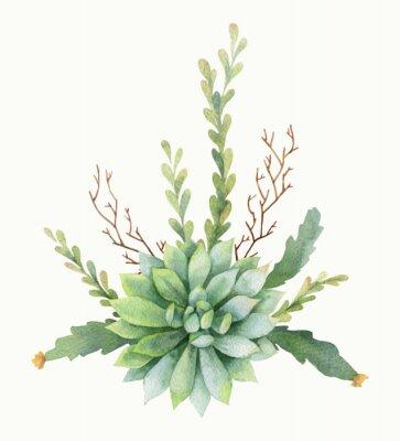 Posters Bouquet de vecteur aquarelle de cactus et plantes succulentes isolés sur fond blanc.