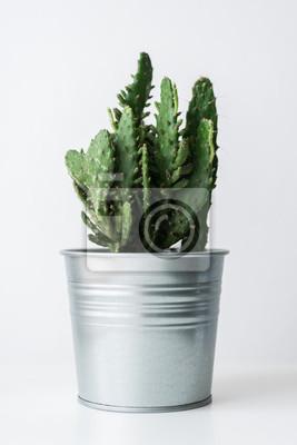 Cactus plante dans un pot de métal se bouchent. Décoration de la chambre moderne. Plante d'intérieur de cactus sur fond blanc.