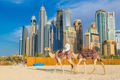 Posters Camel à Dubaï Marina