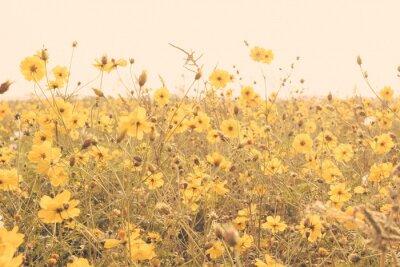 Posters Champ de fleurs jaune prairie vintage rétro