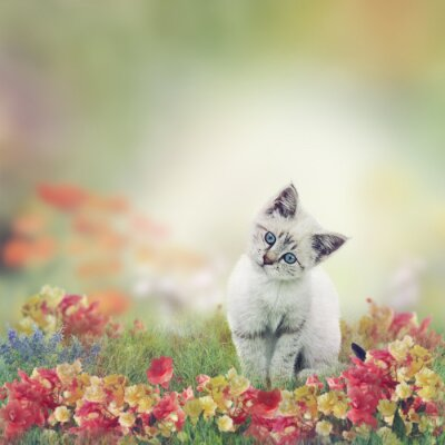Posters Chaton blanc en fleurs