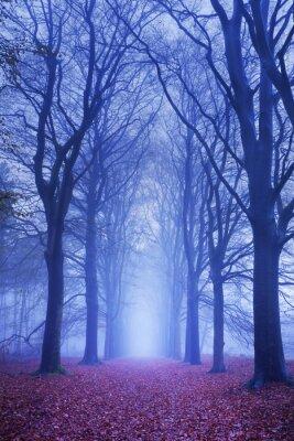 Posters Chemin dans une forêt sombre et brumeuse aux Pays-Bas
