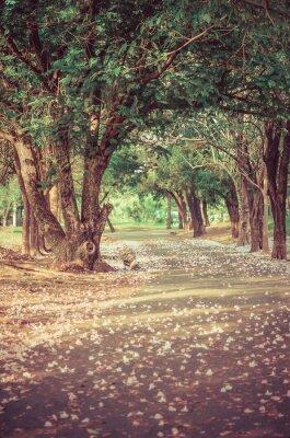 Posters Chemin sous l'arbre-tunnel avec des fleurs dans une atmosphère millésime