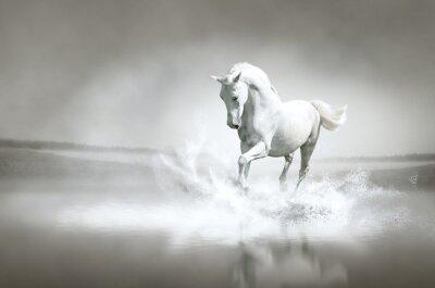 Posters Cheval blanc fonctionnant dans l'eau