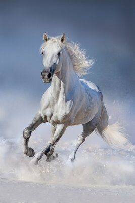 Posters Cheval, neige