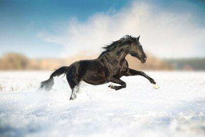 Posters Cheval noir courir dans la neige