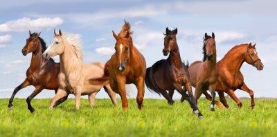 Posters Cheval terme du troupeau dans la belle prairie verte