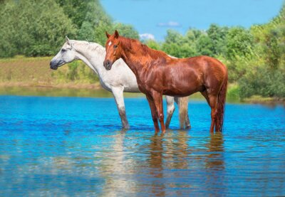 Posters chevaux
