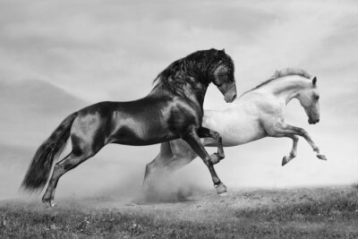 Posters chevaux courent