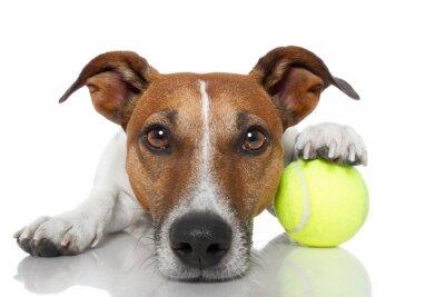chien avec une balle de tennis