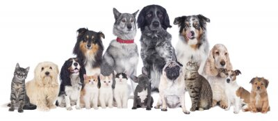 Posters Chiens et chats Groupe