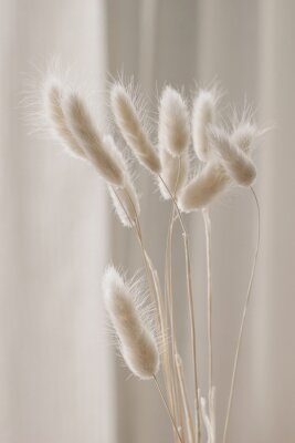 Posters Close-up of beautiful creamy dry grass bouquet. Bunny tail, Lagurus ovatus plant against soft blurred beige curtain background. Selective focus. Floral home decoration. Vertical.
