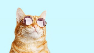 Posters Closeup portrait of funny ginger cat wearing sunglasses isolated on light cyan. Copyspace.