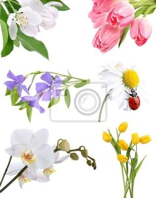 Collage de fleurs sur fond blanc