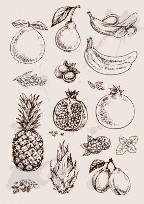 Posters collection de dessin à main isolé fruits