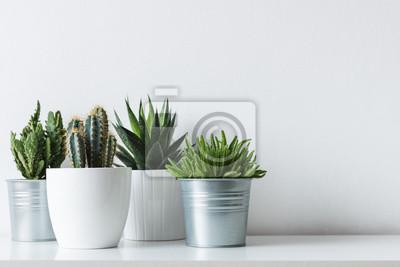 Collection de divers cactus et plantes succulentes dans différents pots. Plantes en pot de cactus en pot sur étagère blanche contre le mur blanc.