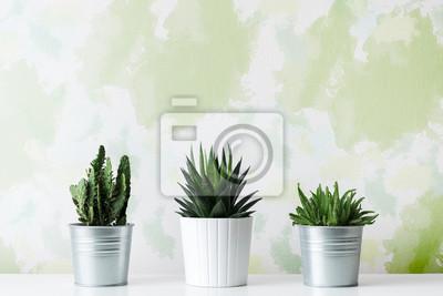 Collection de divers cactus et plantes succulentes dans différents pots. Plantes en pot de cactus en pot sur étagère blanche contre le mur de conception inhabituelle.