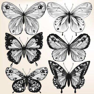 Posters Collection de vecteur tiré par la main papillons détaillées pour la conception