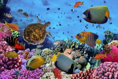 Posters Coloré, corail, récif, beaucoup, fishes