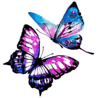 Posters conception de papillons