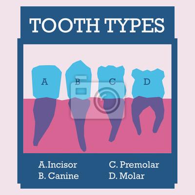 Conception dentaire