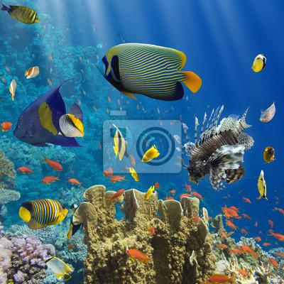 Posters Coraux et de poissons dans le Sea.Egypt Rouge