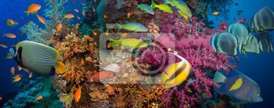 Posters Coraux et les poissons