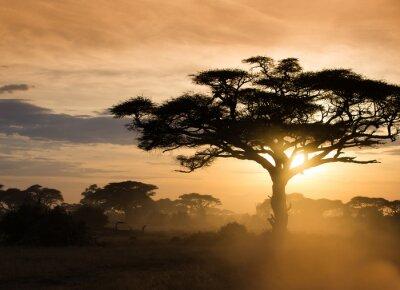 Posters Coucher de soleil sur la savane africaine