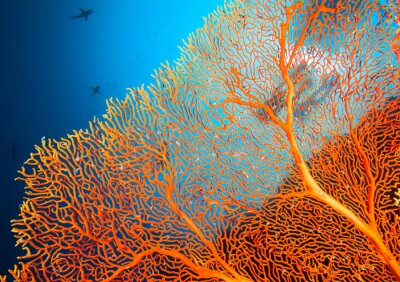 Posters Couple de plongeurs sur les récifs coralliens