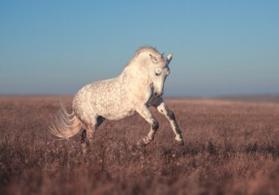 Posters Course à cheval blanc