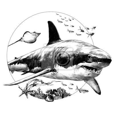 Dessin de requin facile a faire - Dessin requin facile ...