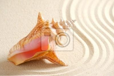 DANS le Coquillage de sable fin