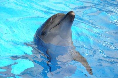Posters dauphin dans l'eau bleue