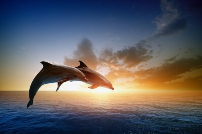 Posters Dauphins sautant