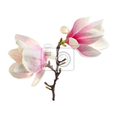 décoration de magnolia