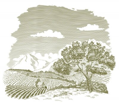 Posters Dessin à la plume et à l'encre d'un champ de ferme avec des montagnes à l'arrière-plan.